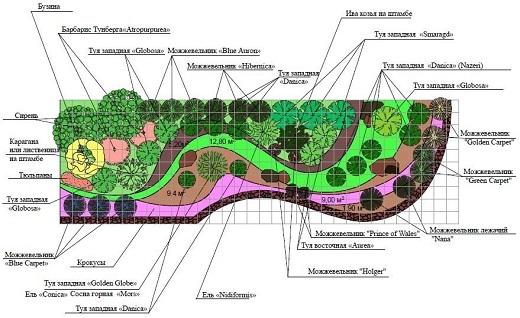 На изображении рекомендуемая схема насаждения растений для устройства альпийской горки