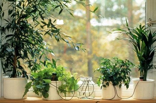 Автоматический полив комнатных растений на фото