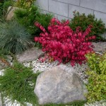 Разновидности Бересклета и применение кустарников в дизайне