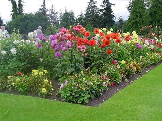 Высадка цветов рядами