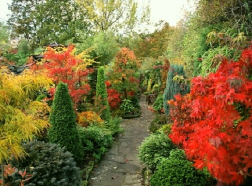 Туя в саду отлично вписывается в красочный дизайн