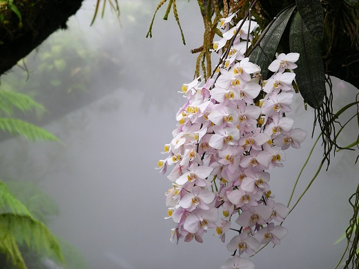 Фаленопсис фото