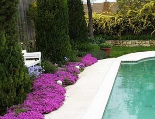 Флокс шиловидный многолетний в украшении сада