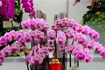 Обзор цветов орхидея фаленопсис