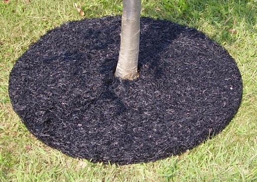 На фото показано мульчирование корней дерева