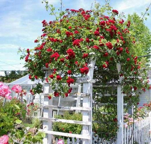 Пластиковая арка с цветами